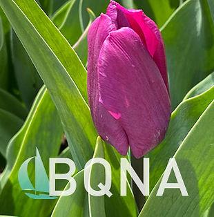 bqna_logo_bgroundSpring.jpg