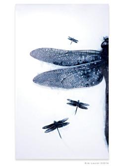 LaurelMaylorDragon Fly-Big