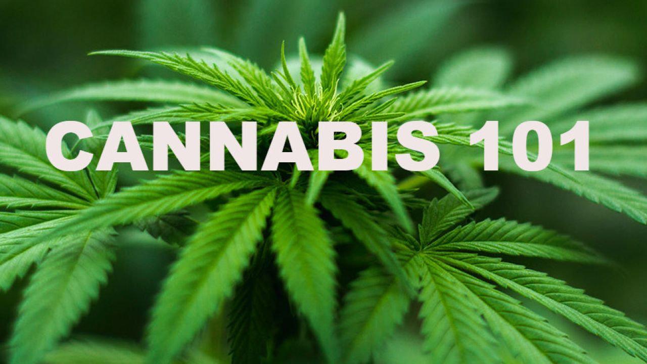 Cannabis101 A & B (8 Weeks Each)