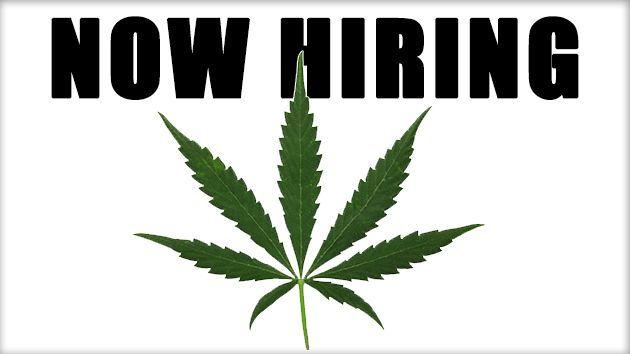 Cannabis Industry Career Development