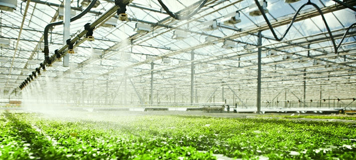 Greenhouse Nutrition & Water Systems