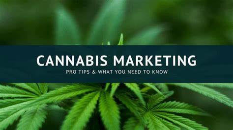 Cannabis Advertising & Marketing