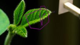 Plant Writing