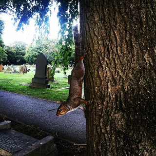 Squirrel clinging to a tree