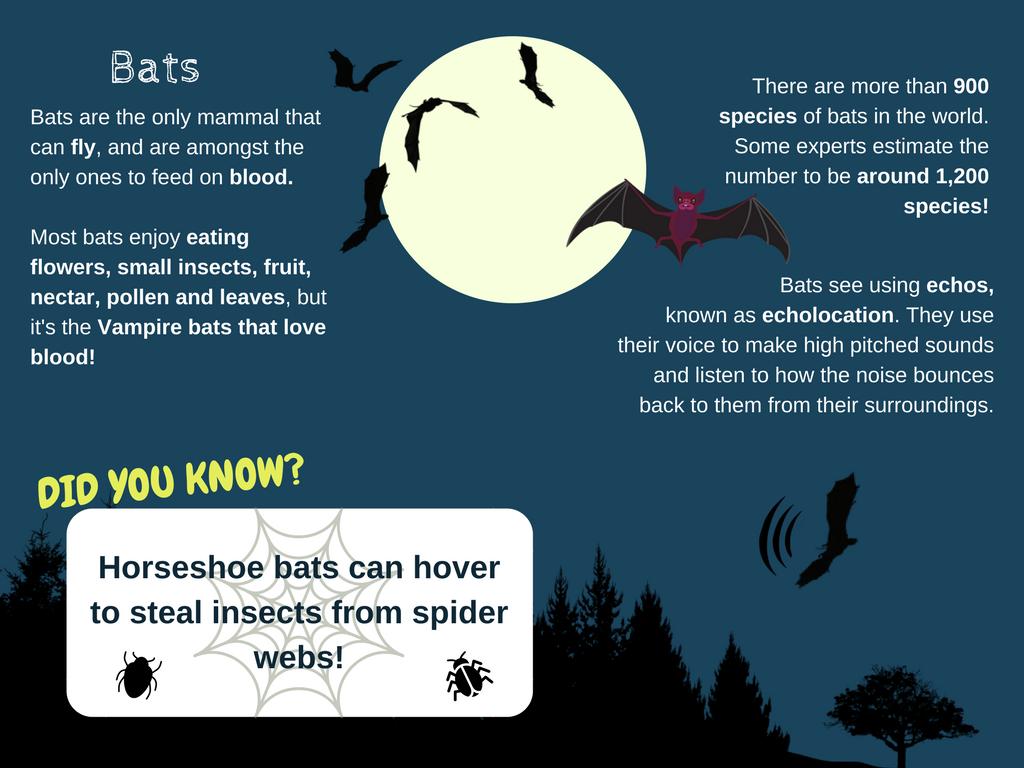 Bats Fact Card