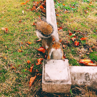 Squirrel Autumn