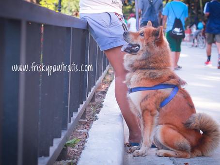 10 Biggest Dog Training Myths - BUSTED!