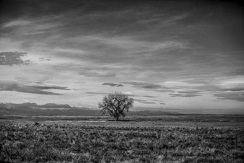 Lone Colorado Tree