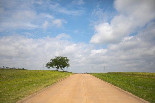 Lone Oklahoma Tree