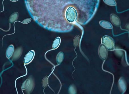 ¿Qué es la inseminación artificial?