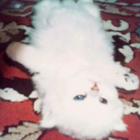 momo the cat