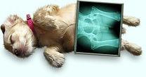 raio-x, radiografia em animais