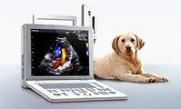 ultrassonografia em animais, veterinaria