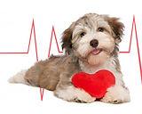 eletro, eletrocardiograma em animais