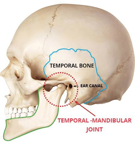Location of Jaw and TMJ