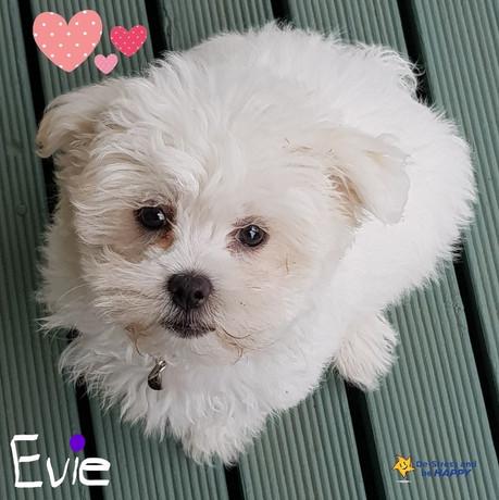 Evie AAI_LI (2).jpg