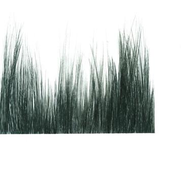 נוף מברשות 2.jpg