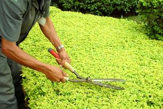 Paisagismo-Jardinagem.jpg