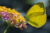 butterfly-3810561_960_720.jpg