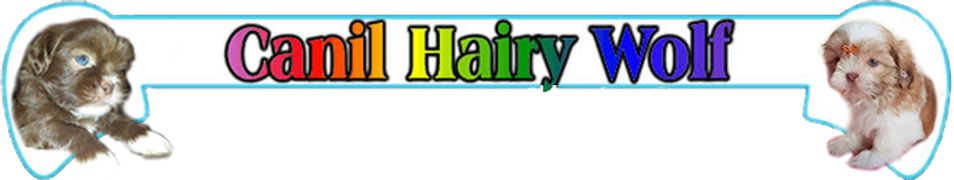 Hair Wolf.Logotipo 4.fw.png