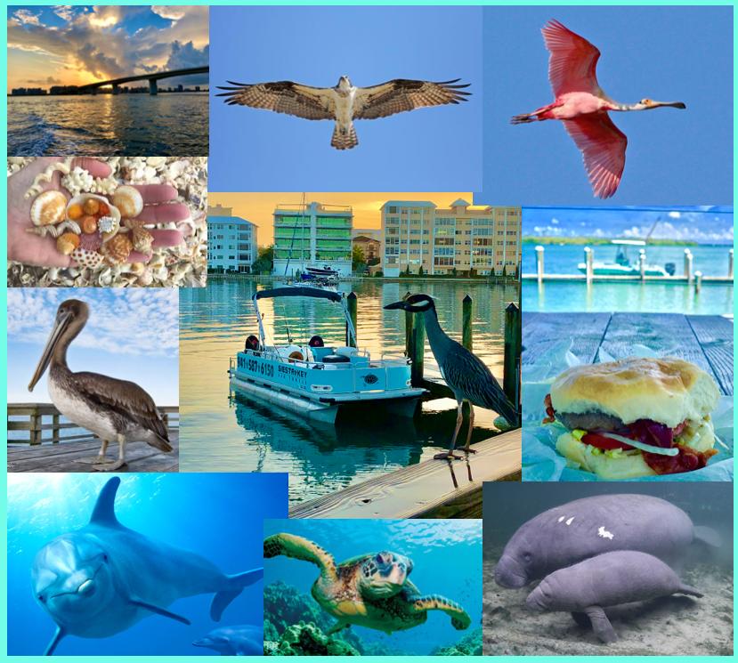 Siesta Key Sea Turtle Colage of Sights.png