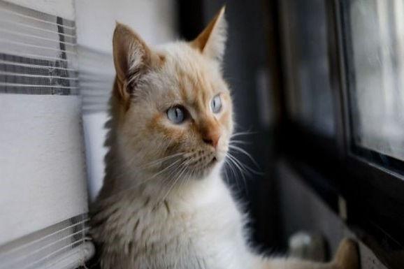 Alerta, aparece otro gato con coronavirus
