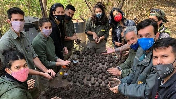 """""""Bombas de semillas"""" para reforestar las Sierras tras los incendios"""