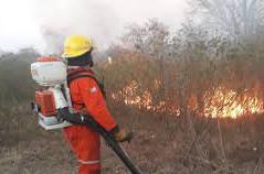 Numerosos focos de incendio en el departamento Río Primero