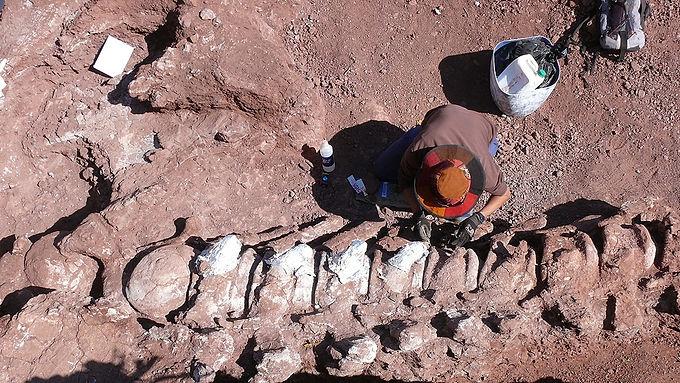 Encontraron restos fósiles de un dinosaurio que podría ser el más grande hasta ahora