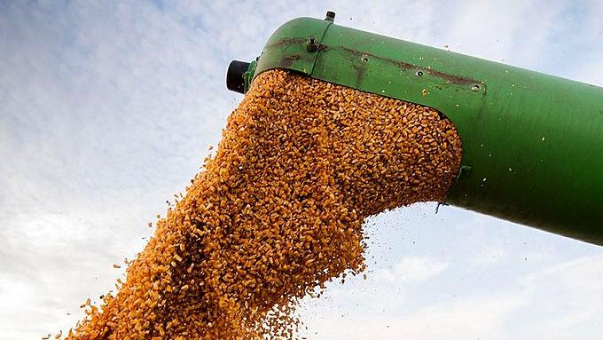 En enero, las empresas agroexportadoras liquidaron un 32% más de divisas
