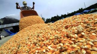 La cosecha de maíz superó por primera vez en 20 años a la de soja