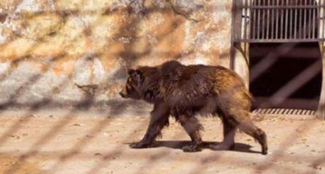 Desidia y abandono del zoológico de Córdoba