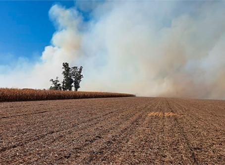 Incendio intencional en un campo de Oliva