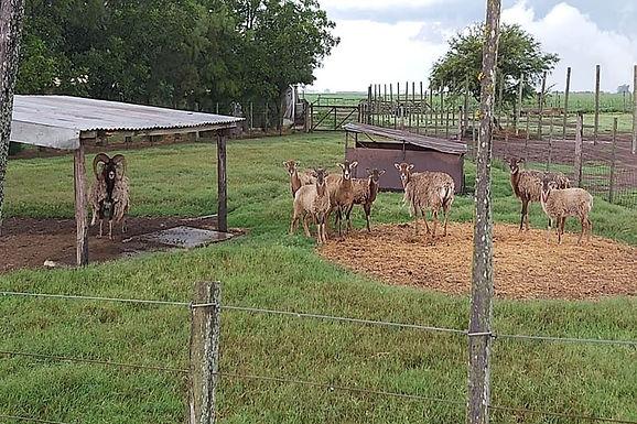 Bell Ville, encontraron animales exóticos en un predio rural