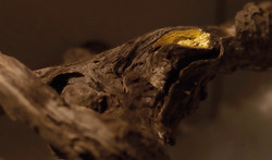 CONNECTED (Detail) | Fundholz mit Gold, Wolle | 210 x 450cm | 2020
