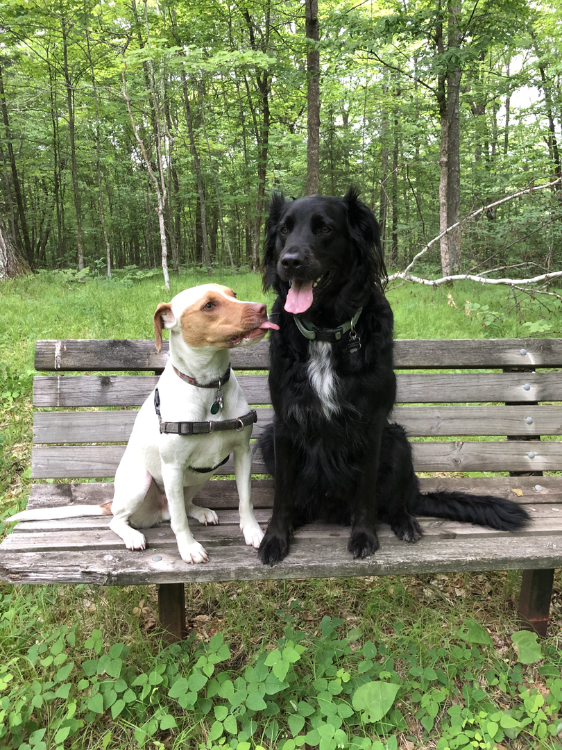 Lupin and his best bud, Granger, at the cabin