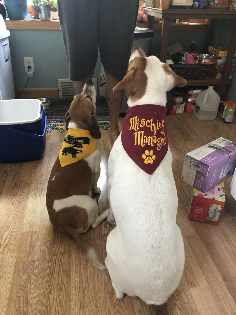 Looking good in their Harry Potter bandanas
