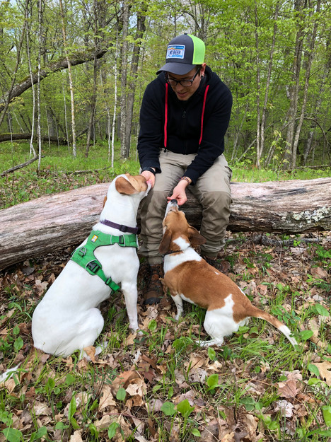 Hiking with pups at the cabin