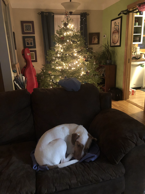 Napping by the Christmas tree