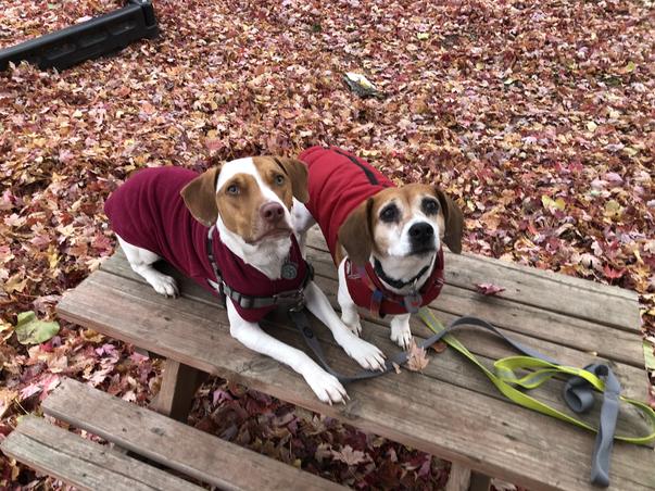 Autumn sweaters