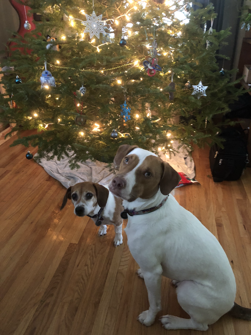 Pups by the Christmas tree