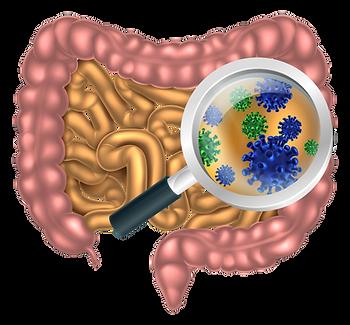 Darmflora Darmbakterien MetaCheck GutFlora