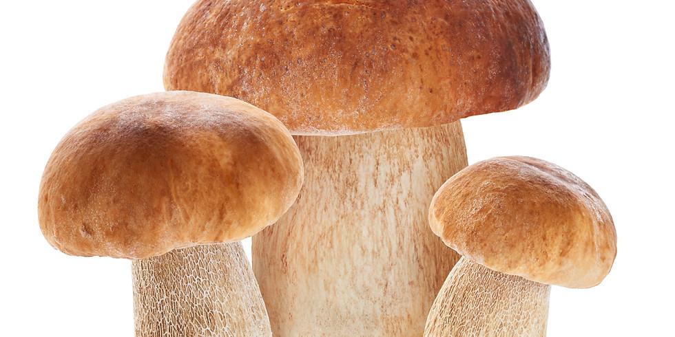 Group King Bolete Mushroom Hunt