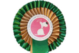 Kennel Club Bronze Rosette.jpg