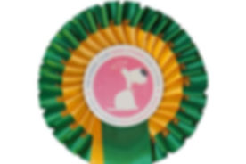 Kennel Club Gold Rosette.jpg