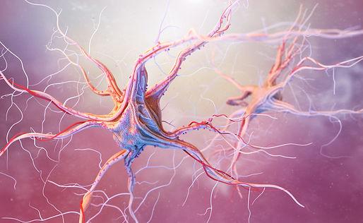 neurons-and-nervous-system-PYYJFWU.jpg