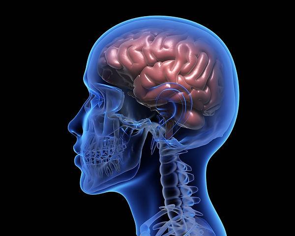 human-brain-PM656JQ (1).jpg