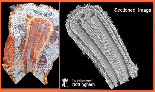 X-ray comparison2.jpg