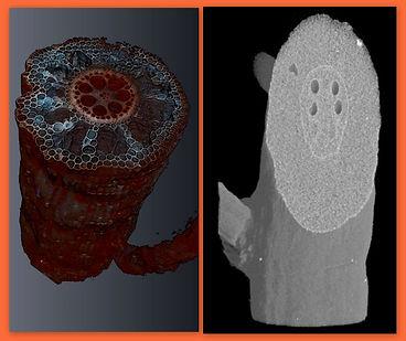 X-ray comparison1.jpg