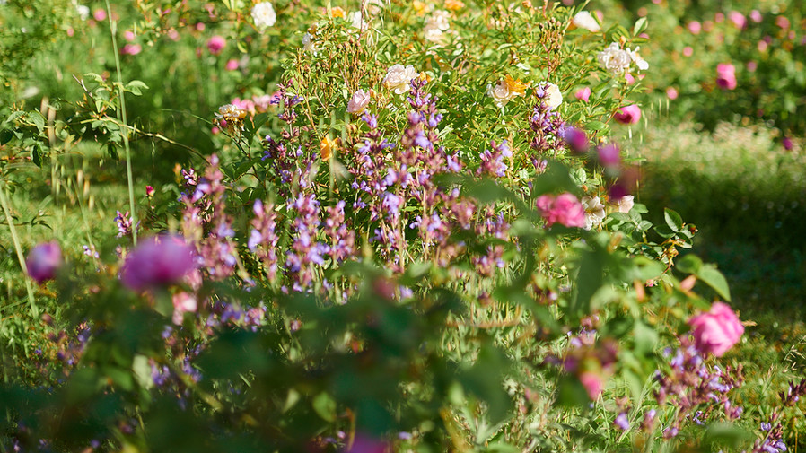 Jardins_01.jpg